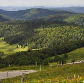 Bol d'air au coeur des Vosges et de l'Alsace