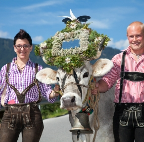 Transhumance au Tyrol