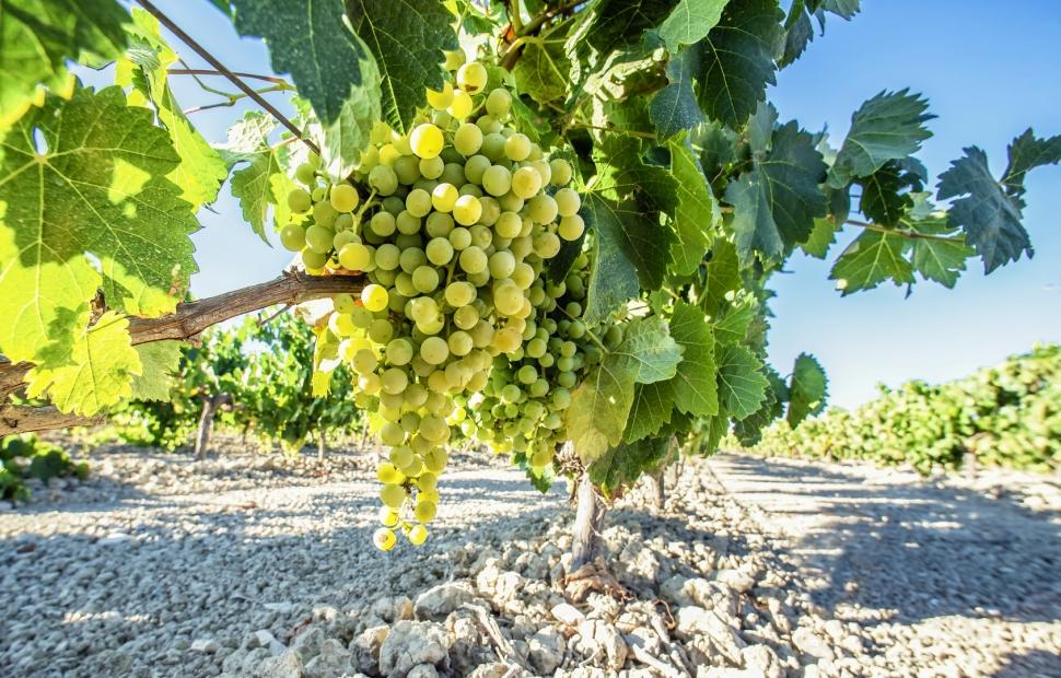 Vignoble portugais - (c) Fotolia
