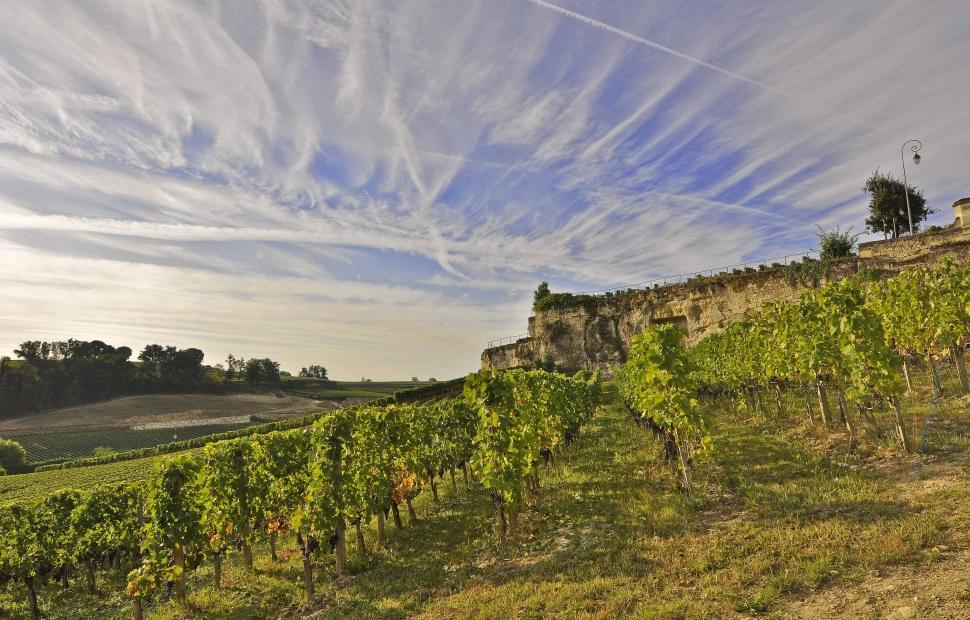 ch�teau viticole @ Jerome Mondiere CRT Aquitaine