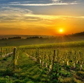 Le Gers, terre d'histoire et de gastronomie au coeur de la Gascogne