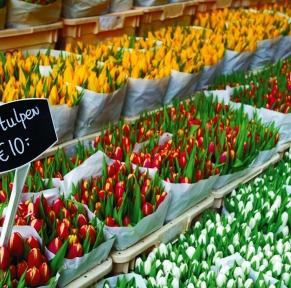 Maastricht, son marché hebdomadaire