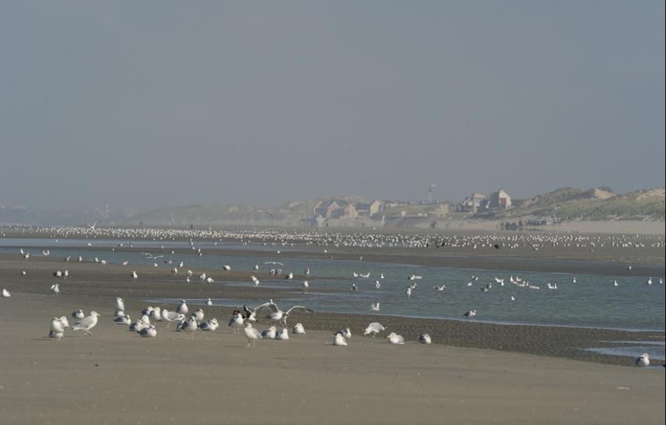 oiseaux baie de somme (c) CDTSomme-DM3