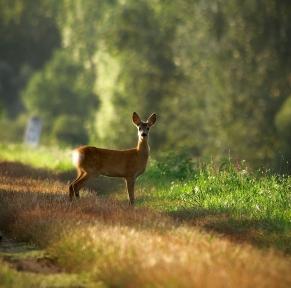 Repas de chasse en Luxembourg belge