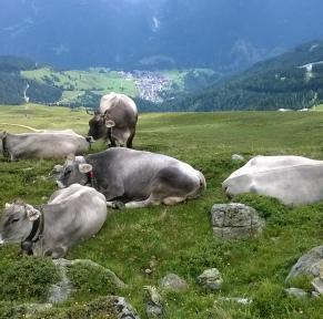 Tyrol : promenades et randonnées