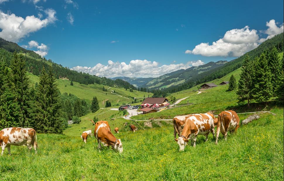 Alpages de Schoenanger (c) Wildschönau