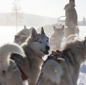 La Laponie finlandaise : magique et mythique