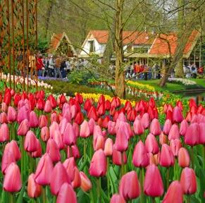 Keukenhof, « Le plus beau parc printanier du monde»