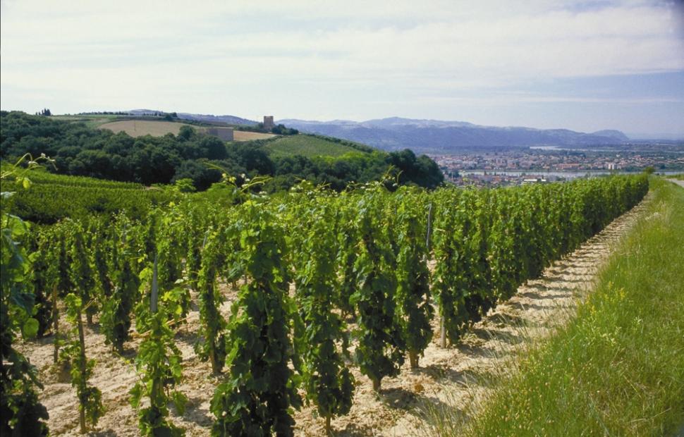Vignoble de Crozes Hermitage - Cru des C�tes du Rh�ne � Inter Rh�neP. M�dard