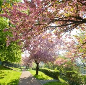 Randonnée en vallée du Rhin, sur les sentiers parmi les plus beaux d'Allemagne