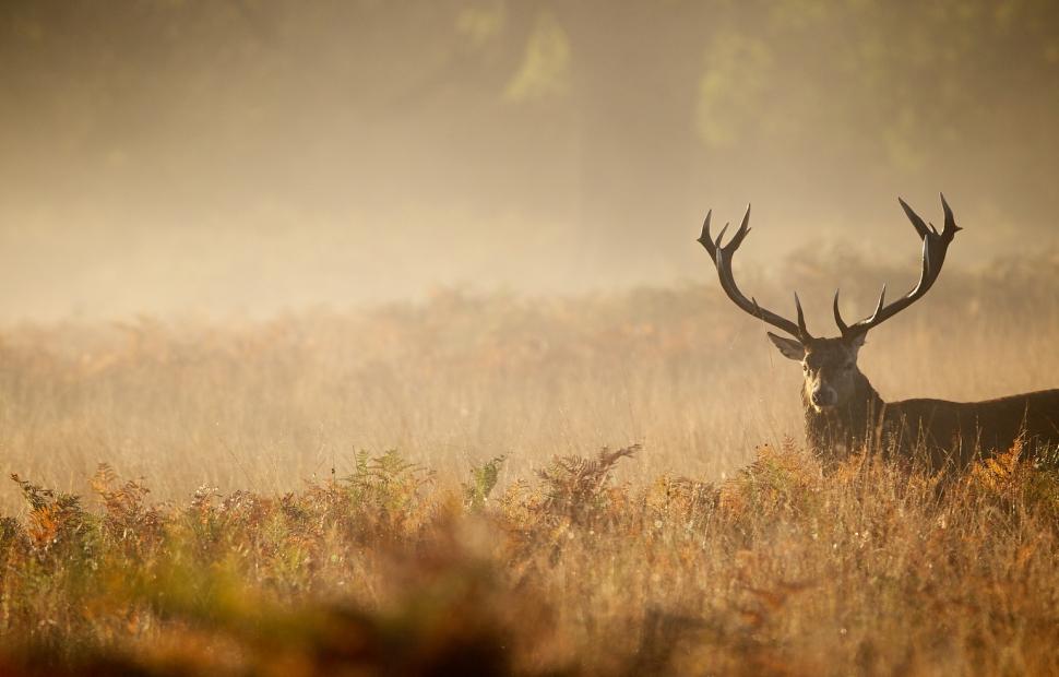 F�te de la chasse � mbridger68 - Fotolia_89363169_M