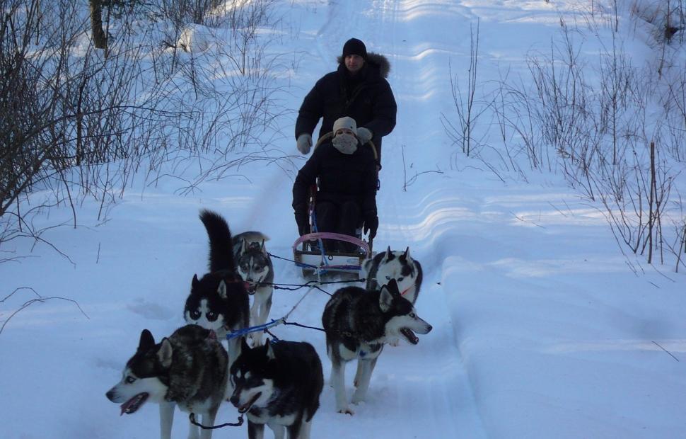 Tra�neau � chiens (c) Village Windigo
