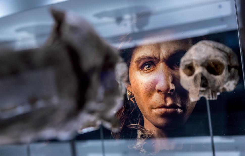� Prehistomuseum - p9