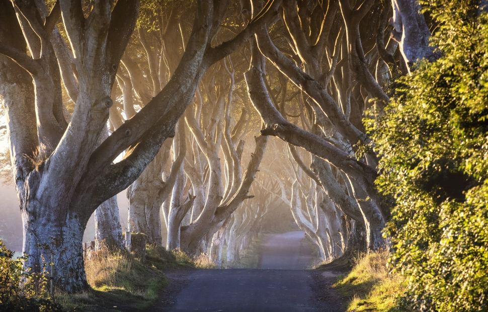 Game of Thrones� - The Dark Hedges~The Kingsroad