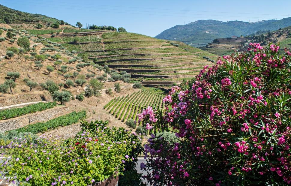 Portugal-Douro-vallee-paysage-vigne�CroisiEurope (1)