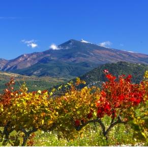 Drôme provençale & Vaucluse