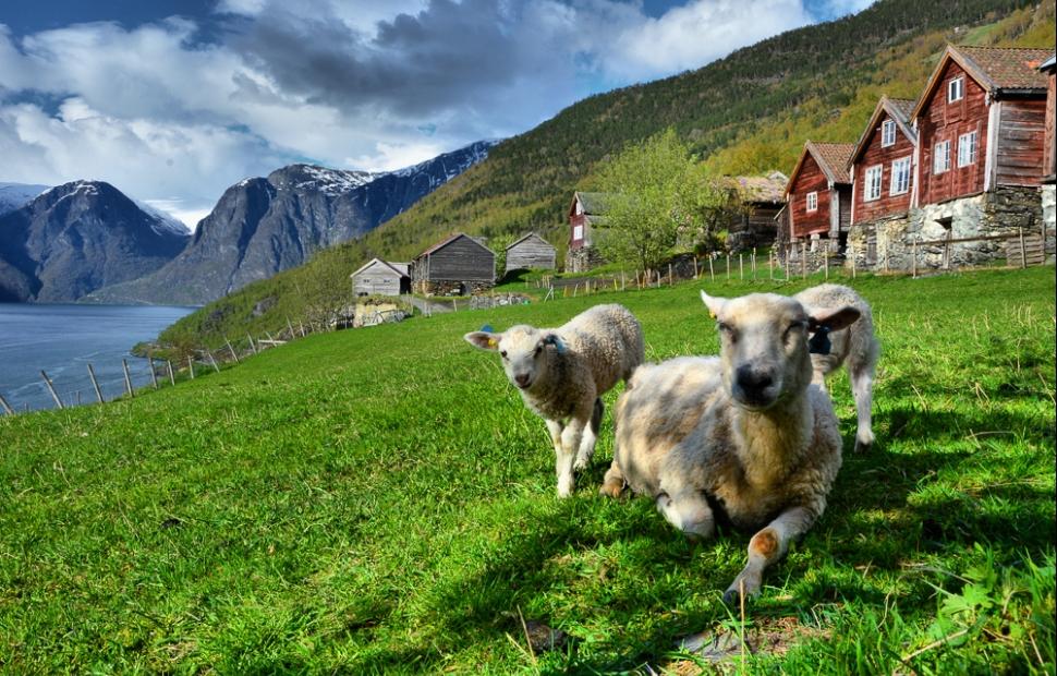 Norvège - village typique - (c) Foap Visitnorway.com