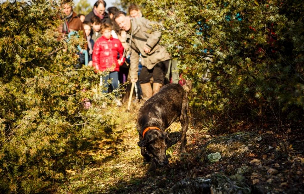 Cavage de truffes, Gordes � Damien Boschi-Photographe