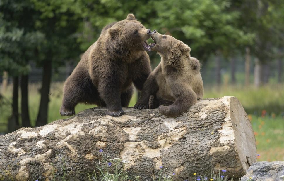 Colline aux Ours - Parc Animalier