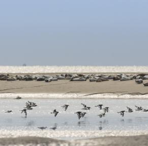 Baie de Somme, la nature en grand