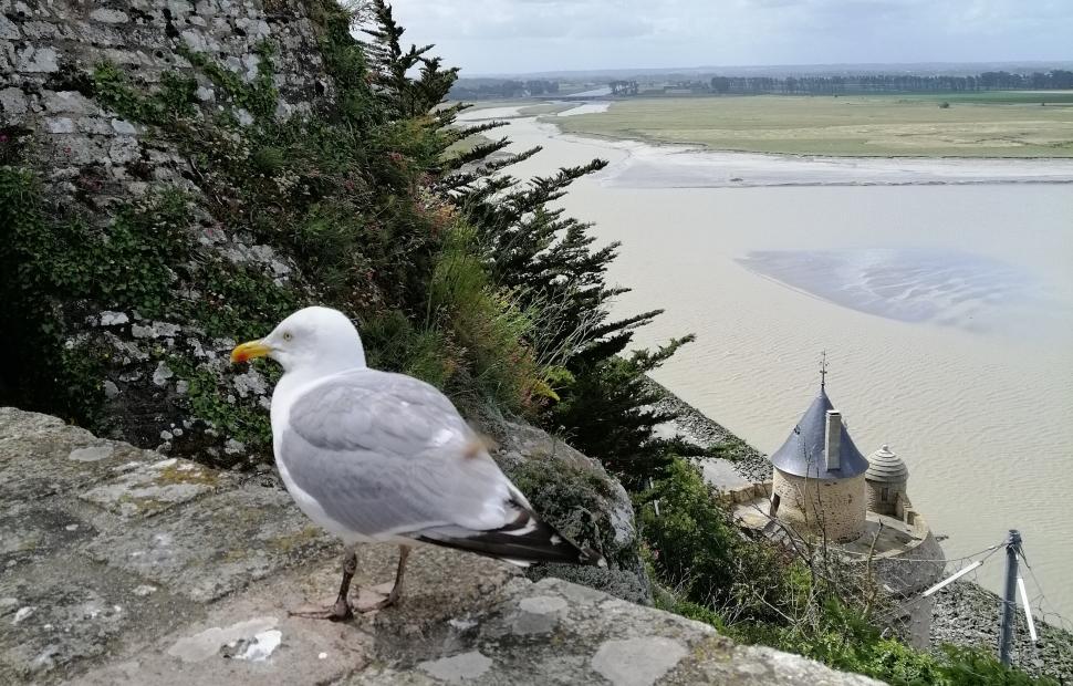 Mont-Saint-Michel, vue sur la baie (c) Raeven G�raldine