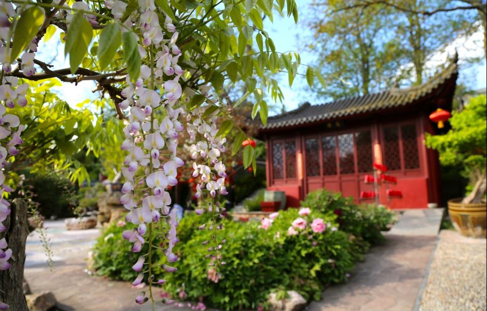 Jardin chinois � Pairi Daiza