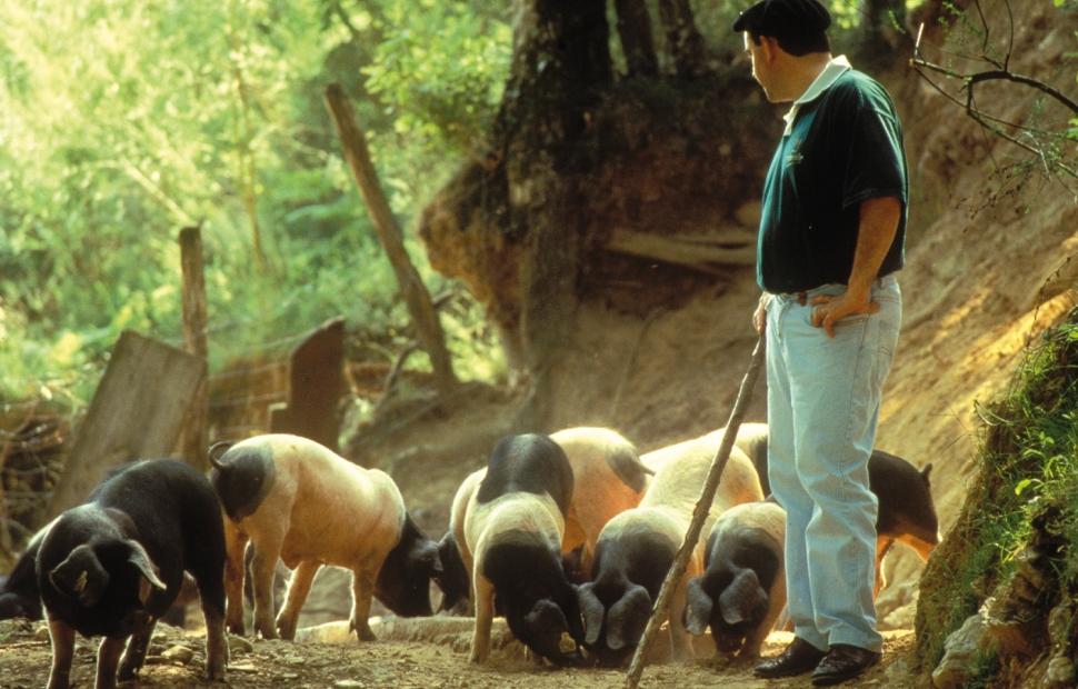 élevage de cochons Pierre Oteiza (c) � L. REIZ CRTA