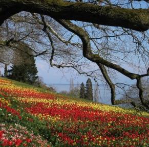 Entre Forêt Noire du Sud et lac de Constance